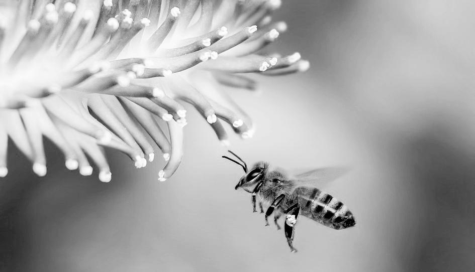 5 faits surprenants que vous ignorez (probablement) sur les abeilles