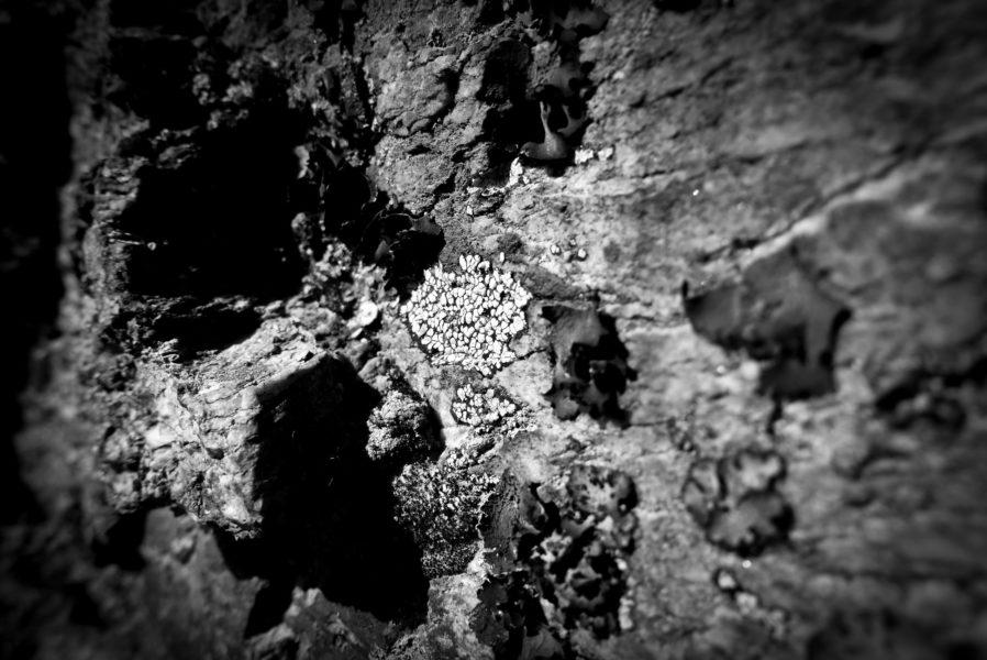 Lichens et roches: une étrange histoire d'amour