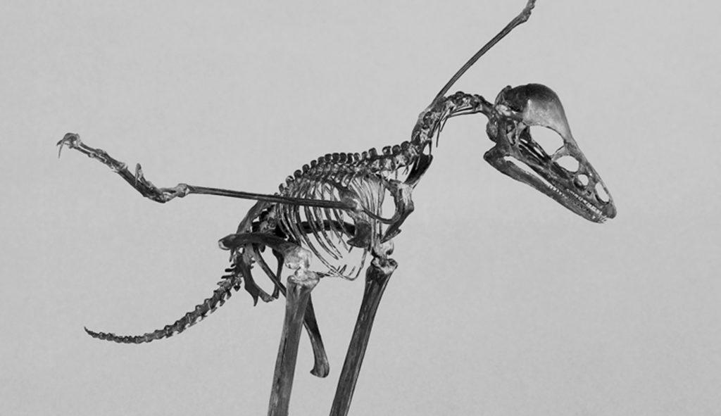 Les incroyables vertébrés fossiles de Chine